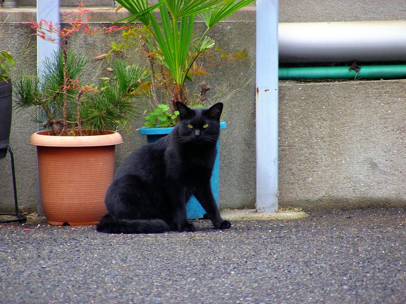 看板の下の黒猫3
