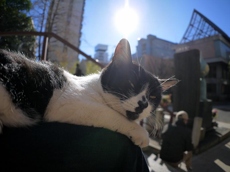 逆光の白黒猫2