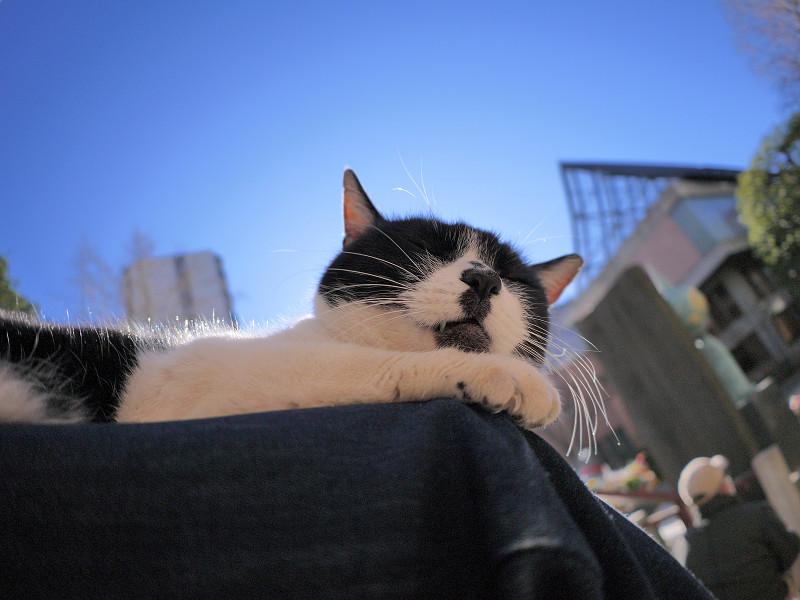 逆光の白黒猫3