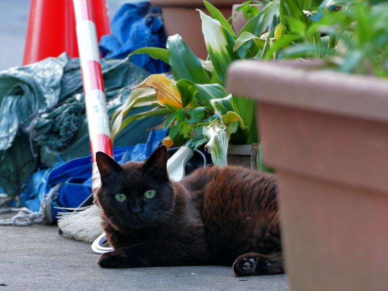 プランターと黒猫2