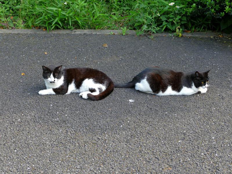 お尻を向け合ってる黒白猫2