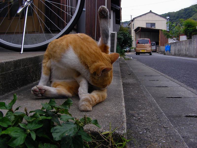 路地で毛繕いの茶白猫1