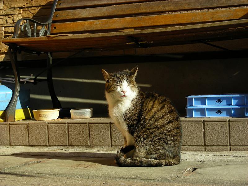 釣り道具屋とキジ白猫2
