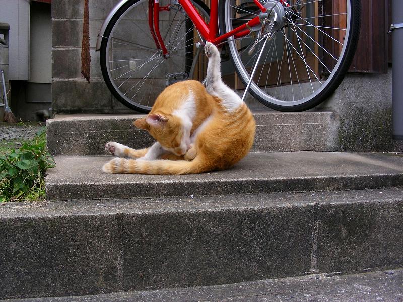 路地で毛繕いの茶白猫2