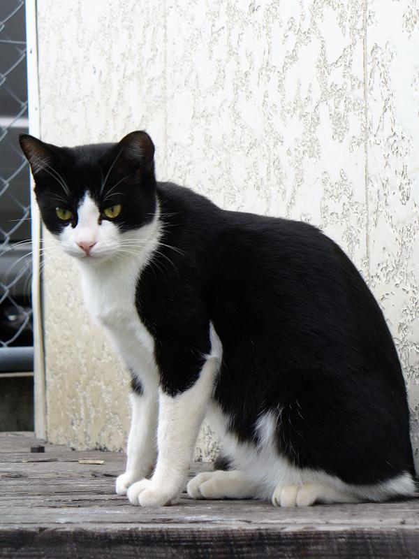 白壁と黒白猫2