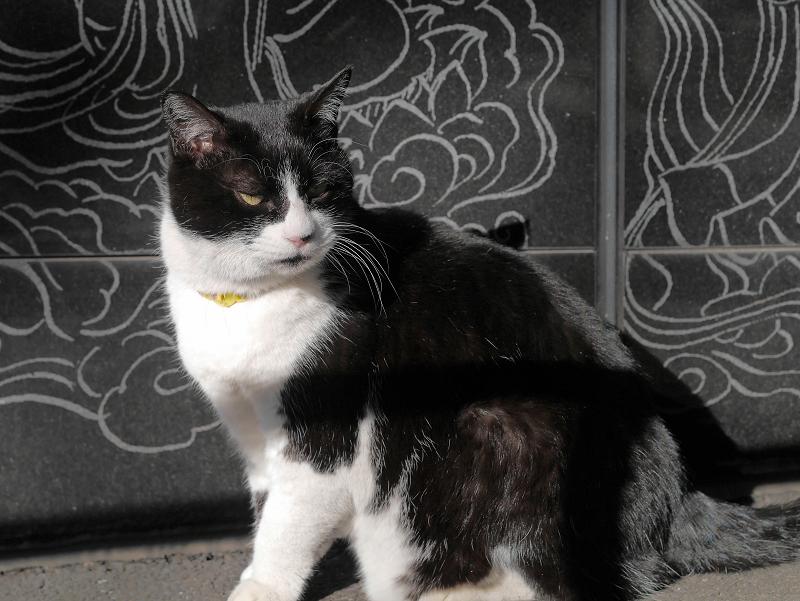 黒御影石と黒白猫1