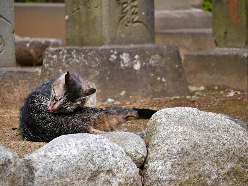 足を伸ばしてるキジトラ猫1