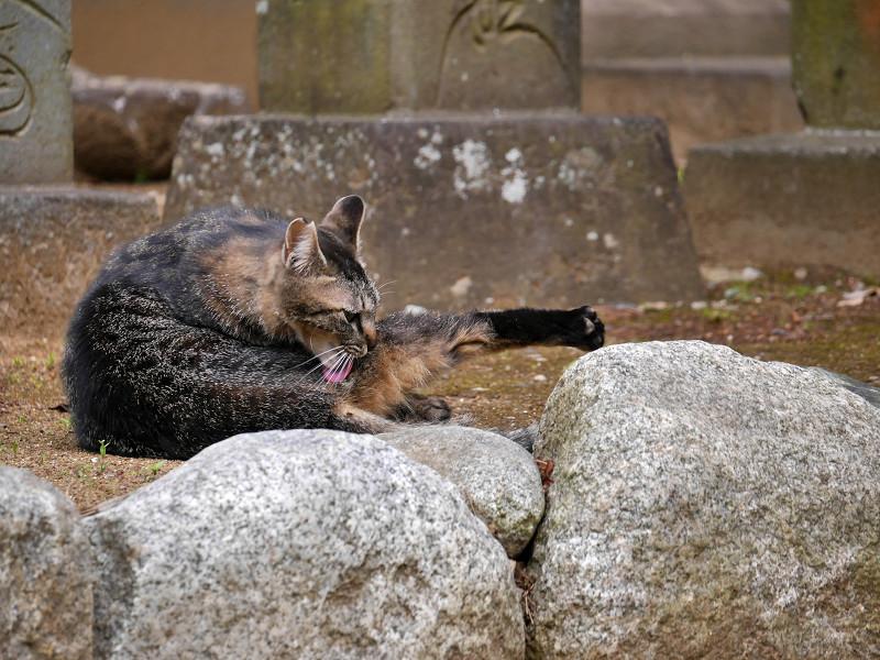 足を伸ばしてるキジトラ猫2