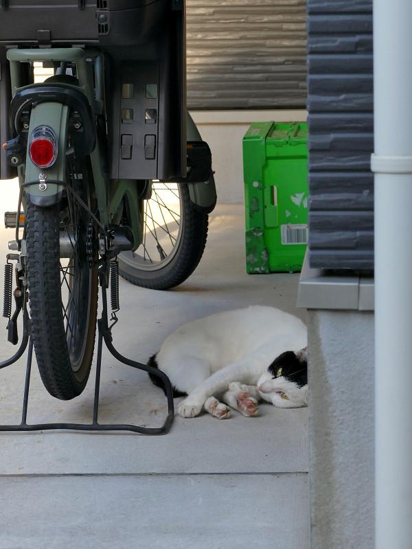 ガレージの白黒ブチ猫3