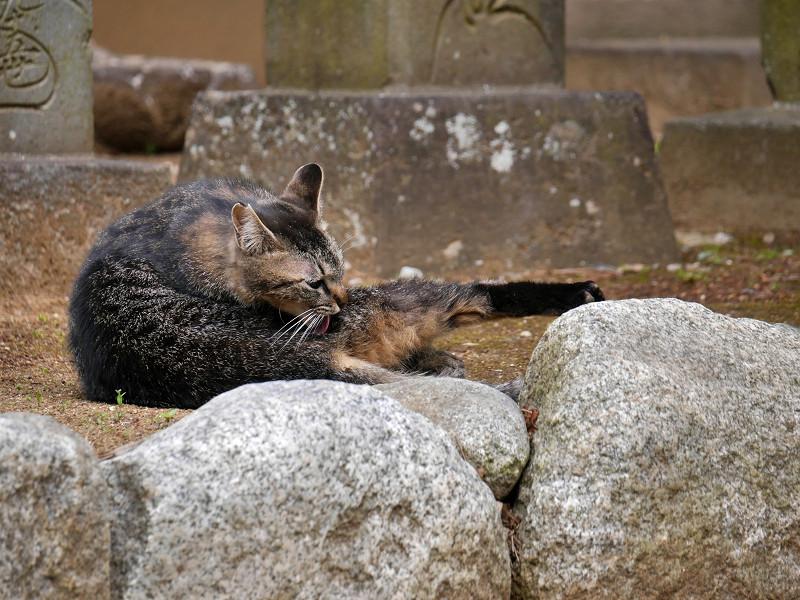 足を伸ばしてるキジトラ猫3