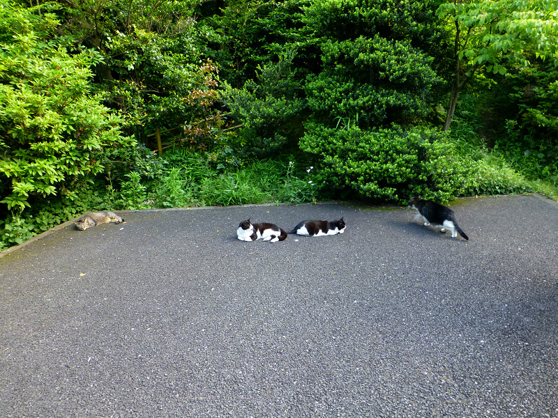 騒いでる猫と騒いでない猫1