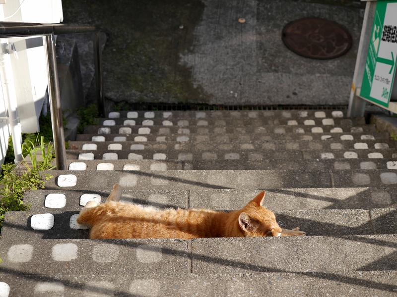 階段で横たわる茶トラ猫1