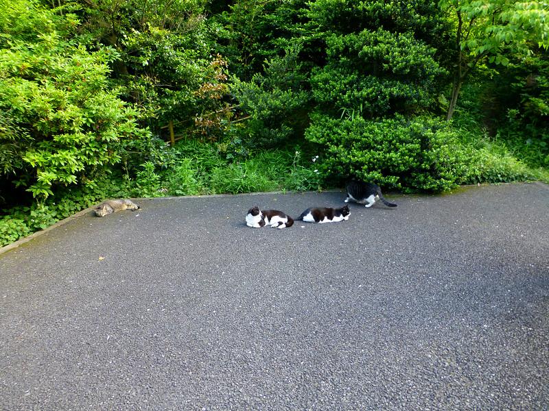 騒いでる猫と騒いでない猫2