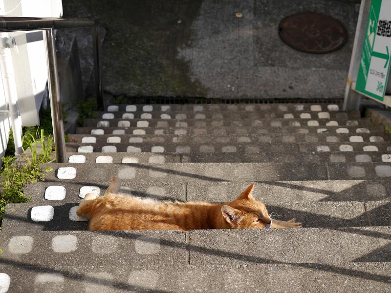 階段で横たわる茶トラ猫2