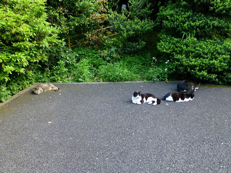 騒いでる猫と騒いでない猫3