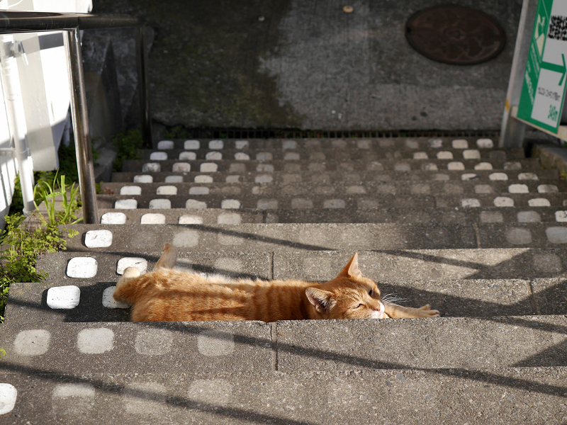 階段で横たわる茶トラ猫3