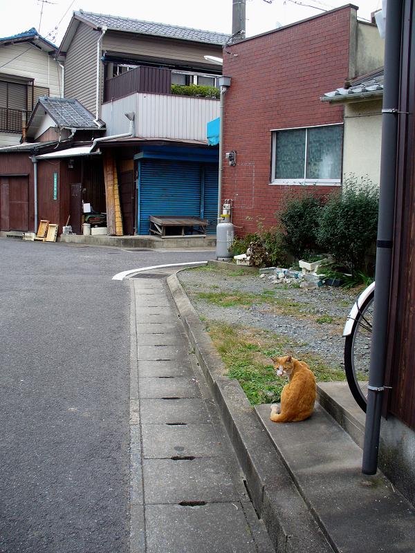 路地で出会った茶白猫3