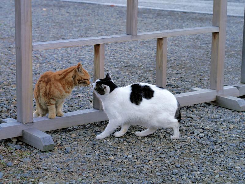 挨拶をする猫たち1