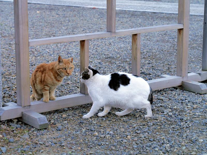 挨拶をする猫たち2