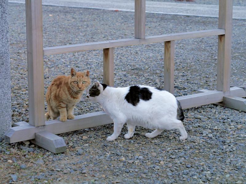挨拶をする猫たち3