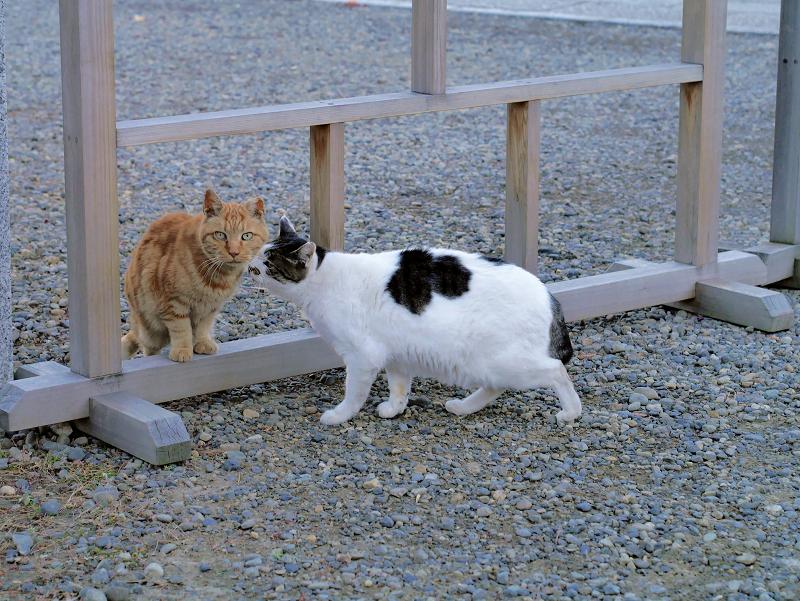 挨拶をする猫たち4