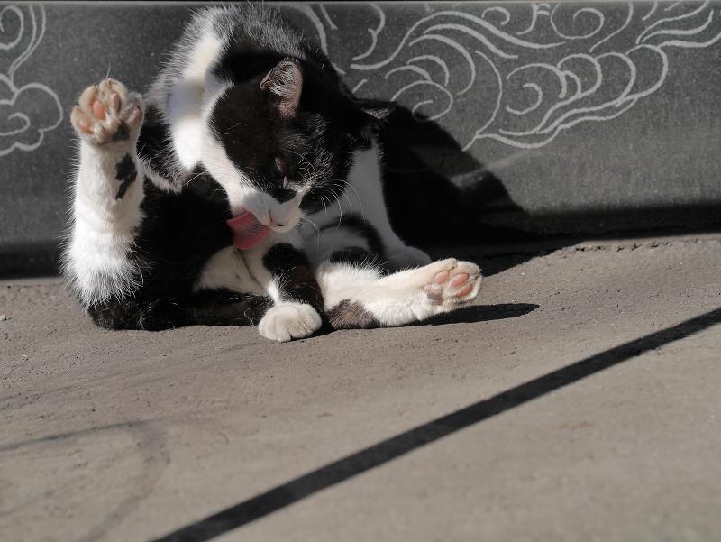 ベロ出し毛繕いの黒白猫2
