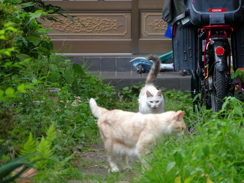 玄関道を走る猫2