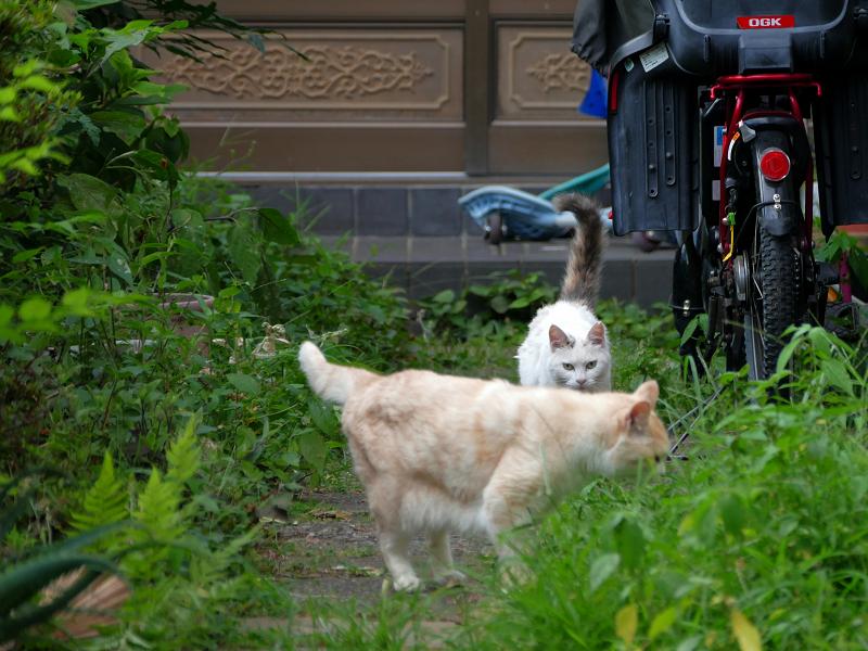玄関道を走る猫3