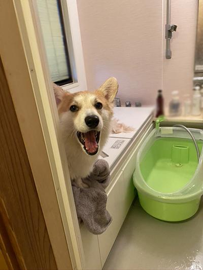 風呂の蓋の上あくび