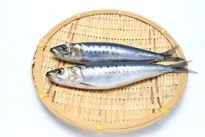 Sardine.jpg