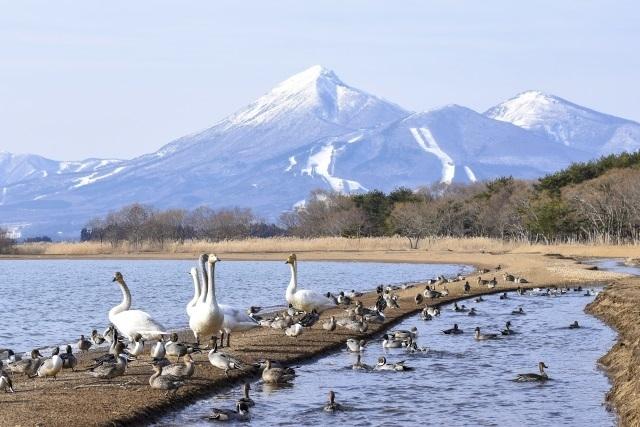 fukushima-image.jpg