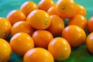 kumquat.jpg