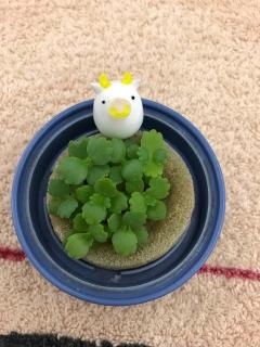 草の成長_06