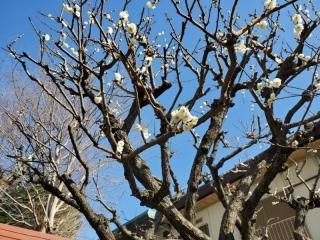 春を見つけました_01