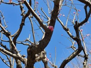 春を見つけました_03