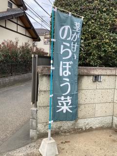 のらぼう菜_01
