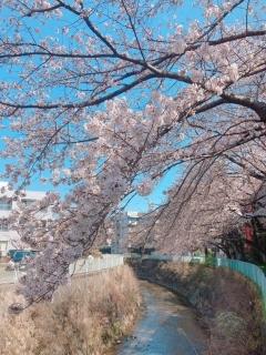 新百合ヶ丘周辺の春_04
