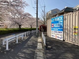 二ヶ領用水沿いの桜_02