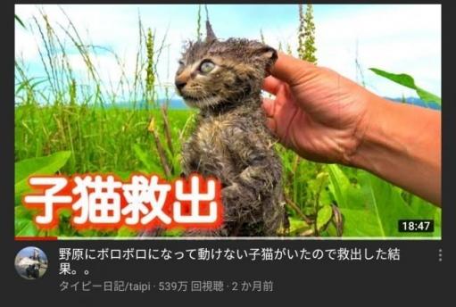 【朗報】捨て猫拾ってきた系YouTuber、ポリシー変更により終わる