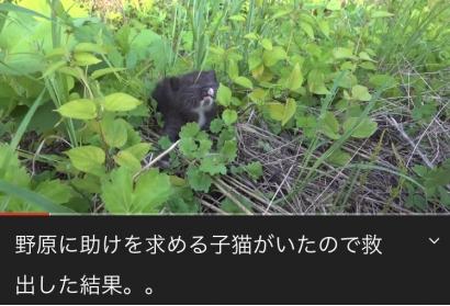 【速報】捨て猫を拾いまくってるYouTuberタイピー日記さん、ついにアカウント停止! 停止理由がヤラセ・暴力関連の模様www