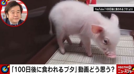 【悲報】『100日後に食われるブタ』の豚、食われないでやっぱり生きてたwwww