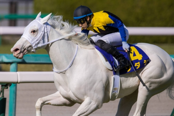 【悲報】今の競馬界、誰でも知ってるような馬がいない・・・・