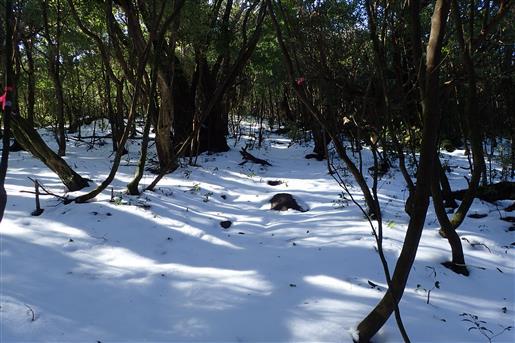 2月24日 愛子岳登山道