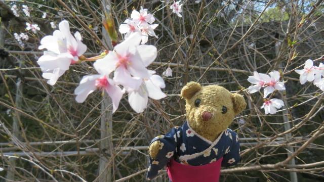 2021 3 17 枝垂れ桜(お城)&ベァー
