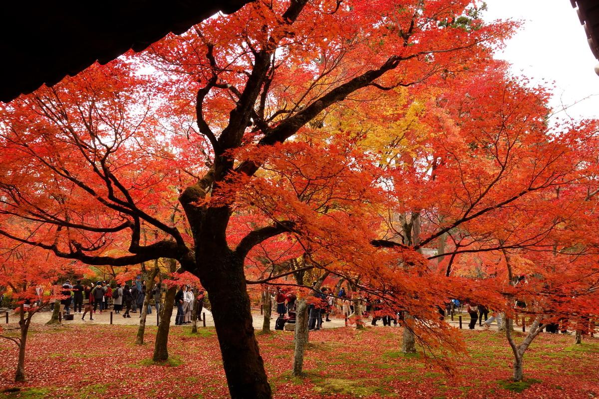京都・東福寺①