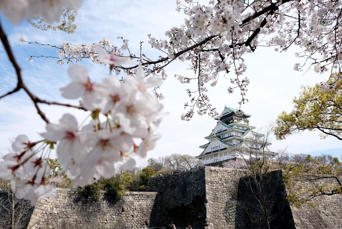 大阪城・花見・桜①
