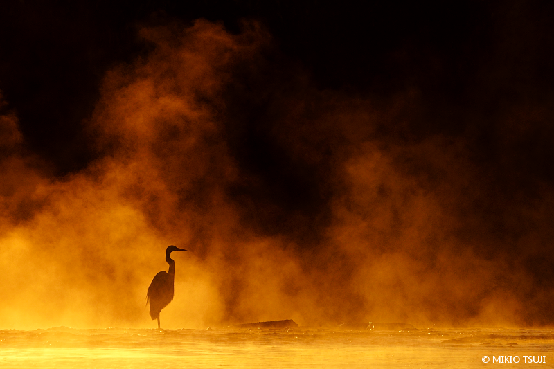 絶景探しの旅 - 絶景写真No.1551 炎の鳥 (多摩川/東京都 立川市)
