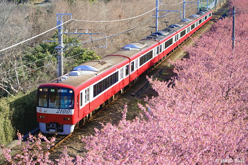絶景探しの旅 - 絶景写真No.1602 春の三浦半島を走る京急線 (神奈川県 三浦市)