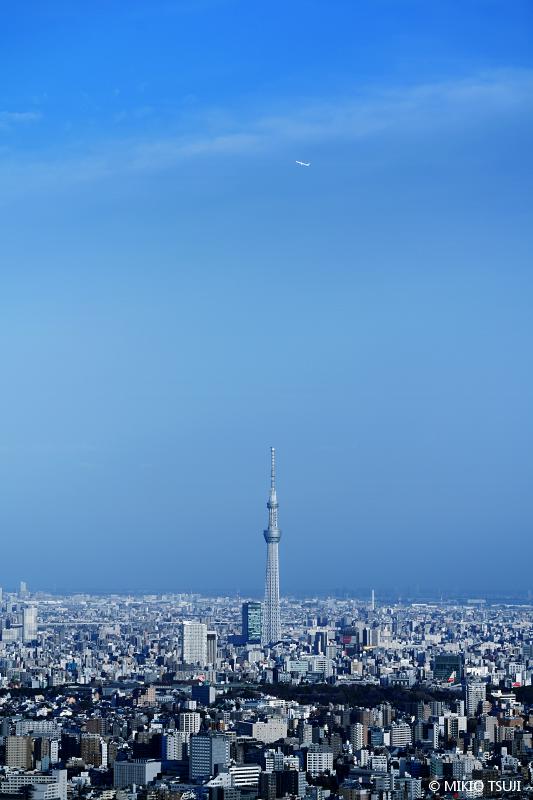 絶景探しの旅 - 絶景写真No.1616 JALと空の木 (東京都 豊島区)