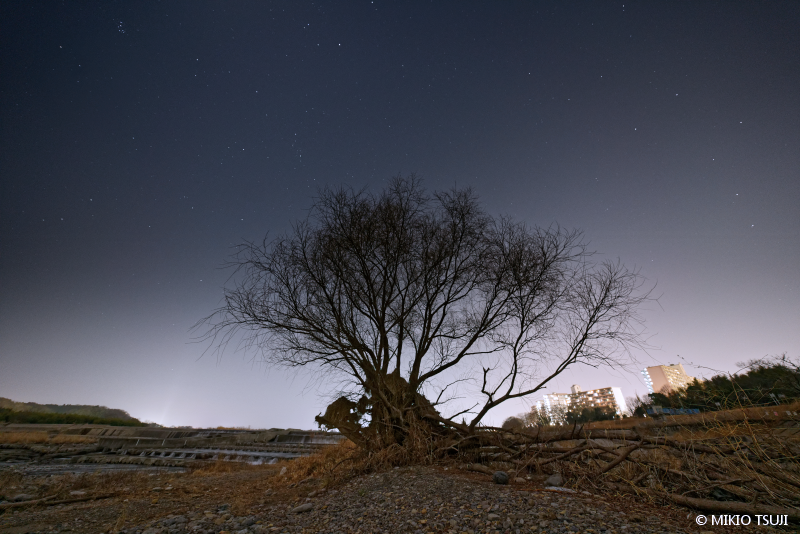 絶景探しの旅 - 絶景写真No.1620 枯木 (多摩川/東京都 昭島市)